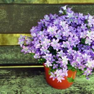 Vaso de flor decorado
